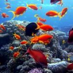 Mar-Rosso-Egitto