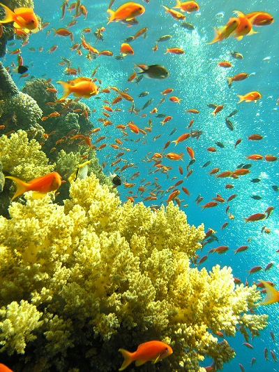 Mar-rosso-Sharm-El-Shiekh-pesci-tropicali
