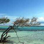 Aruba-Mare-Caraibi-5