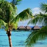 Moorea-Polynesia-mare-splendido-palme